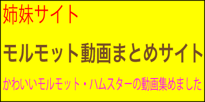 モルモット動画まとめサイト